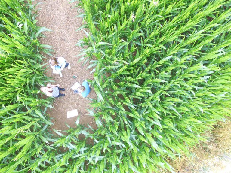 krew eifel luftbild maislabyrinth Besucher Quiz Irrwege 2017-07-17-PHOTO-00000851