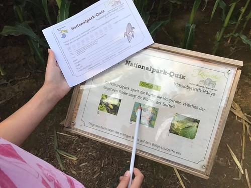 maislabyrinth Quiz Stationen im Feld Plexiglas SCheibe nationalpark kinder familien fragen sommerferienprogramm